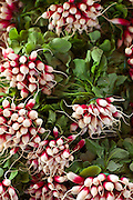 Red and white fresh radish at a food market in Bordeaux region of France