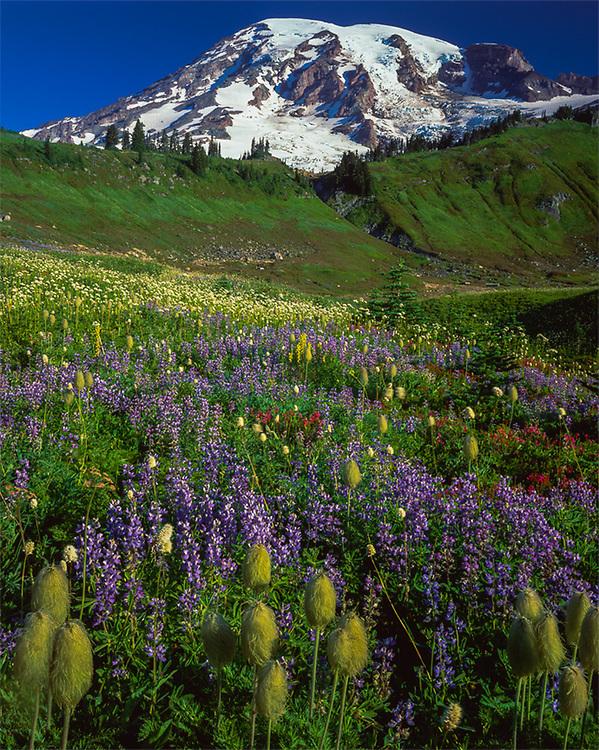 Mount Rainier and Paradise Meadow, summer wildflowers, Mount Rainier Natioinal Park, Washington, USA