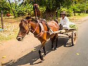 27 FEBRUARY 2015 - PONHEA LEU, KANDAL, CAMBODIA: A horse drawn cart on a country road in Kandal province, Cambodia.    PHOTO BY JACK KURTZ