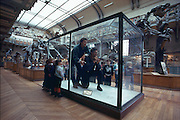 Two fine Photo sapien specimens, John Knoebber and I, are admired by grade-school visitors at the National Museum of Natural History in Paris, where modern paleontology began in the eighteen century with Baron Georges Cuvier.
