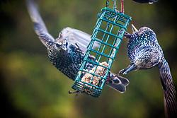 Birds feeding in the garden.
