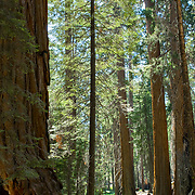 Sequoia National Forest. California, USA