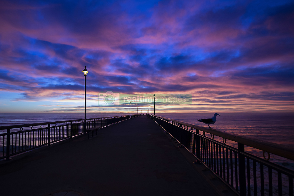 May 5, 2019 - Christchurch, New Zealand - A Seagull stands on a pier as clouds above the beach and pier light up dramatically during the sun rises at New Brighton Beach in Christchurch, New Zealand. (Credit Image: © Sanka Vidanagama/NurPhoto via ZUMA Press)