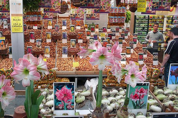 Nederland, Amsterdam, 14-8-2010Op de bloemenmarkt aan de Singel zijn allerlei soorten bloembollen te koop.Foto: Flip Franssen/Hollandse Hoogte