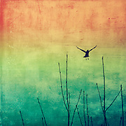 Bird flyin away - <br /> prints & more. http://society6.com/DirkWuestenhagenImagery/AEriaL-VXp_Print