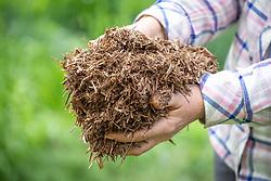 Handful of strulch mulch