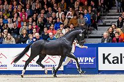 355, Meilleur<br /> KWPN hengstenkeuring - 's Hertogenbosch 2020<br /> © Hippo Foto - Dirk Caremans<br /> 31/01/2020