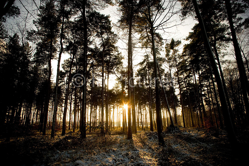 Last light at Thetford Forest along the A11 on the 22nd December 2009 in Thetford in the United Kingdom.