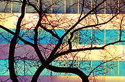 Abstract of tree an dbuilding in urban environment