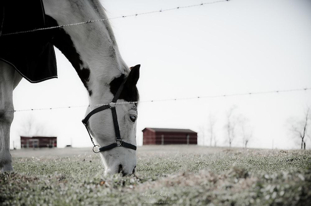 In Salem County a horse grazes on a near barren pasture as winter nears.