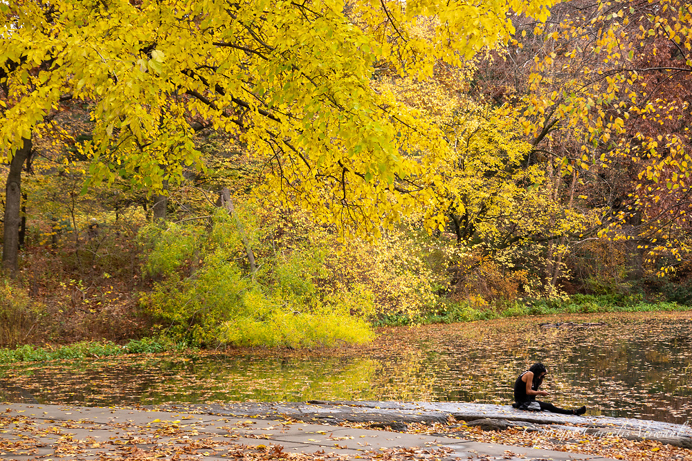 Autumn colors at Turtle Pond in Central Park