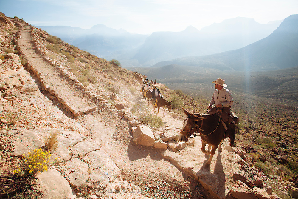 Mule train in the Grand Canyon. Grand Canyon National Park, AZ.