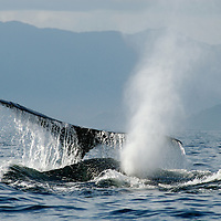 Whales - Mexico