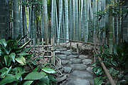 entrance to bamboo forest garden Kamakura Japan