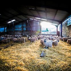 Kate Roswell's farm at Hundleshope