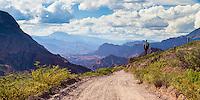 PAYSAJE SERRANO, CARDON (Trichocereus pasacana) Y CAMINO DESDE SANTA BARBARA HACIA ESTANCIA LA CIENEGUITA, QUEBRADA DE LAS CONCHAS, CAFAYATE, PROVINCIA DE SALTA, ARGENTINA (PHOTO © MARCO GUOLI - ALL RIGHTS RESERVED)
