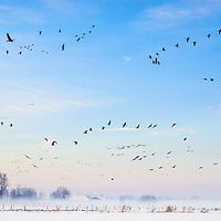 Natuurfotografie en landschapsfotografie / Nature Photography, Conservation Photography and Landscape Photography © Jürgen de Witte - www.jurgendewitte.com