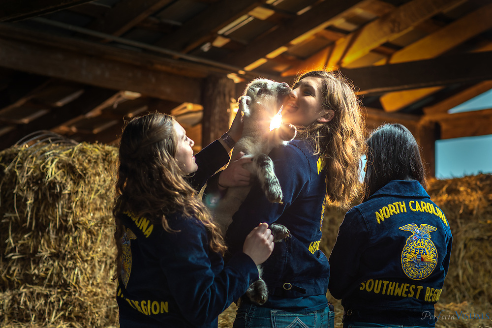 From left, West Rowan High School members Ryley Corriher, Lauren Hayes, and Mayerlin Alpizar, attend to a Bea, a 3-week-old lamb in the FFA facilities at the school. Founded in 1928, Future Farmers of America is an intracurricular student organization for those interested in agriculture and leadership.<br /> <br /> Photographed, Friday, March 1, 2019, in Mt Ulla, N.C. JERRY WOLFORD and SCOTT MUTHERSBAUGH / Perfecta Visuals