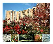 Montebello Condominium