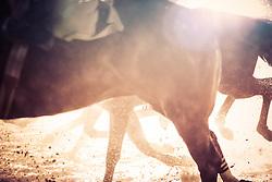 Colmar com a condução de L.Costa vence o páreo de 1.600m para produtos de 4 anos e mais idade com o tempo de 1m44s. FOTO: Jefferson Bernardes/ Agência Preview