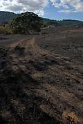 William L. Finley National WIldlife Refuge, Oregon, oak savanna  after a prescribed burn. Digital Composite, HDR