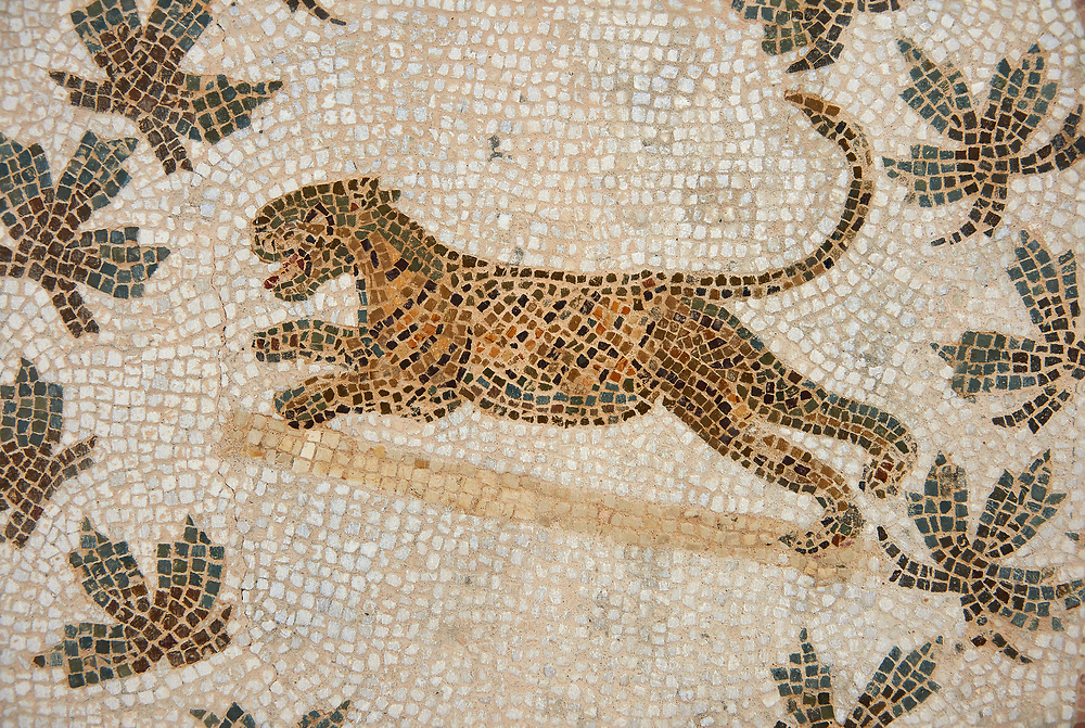 Picture of a Roman mosaics design depicting  panthers, from the ancient Roman city of Thysdrus. 3rd century AD, House of Dolphins. El Djem Archaeological Museum, El Djem, Tunisia. .<br /> <br /> If you prefer to buy from our ALAMY PHOTO LIBRARY Collection visit : https://www.alamy.com/portfolio/paul-williams-funkystock/roman-mosaic.html . Type - El Djem - into the LOWER SEARCH WITHIN GALLERY box. Refine search by adding background colour, place, museum etc<br /> <br /> Visit our ROMAN MOSAIC PHOTO COLLECTIONS for more photos to download as wall art prints https://funkystock.photoshelter.com/gallery-collection/Roman-Mosaics-Art-Pictures-Images/C0000LcfNel7FpLI