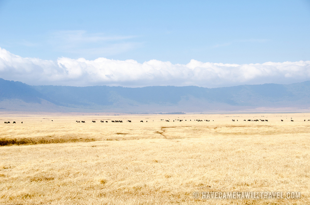 The grassy plains of the Ngorongoro Crater in the Ngorongoro Conservation Area, part of Tanzania's northern circuit of national parks and nature preserves.