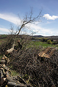 cut down tree in rural landscape