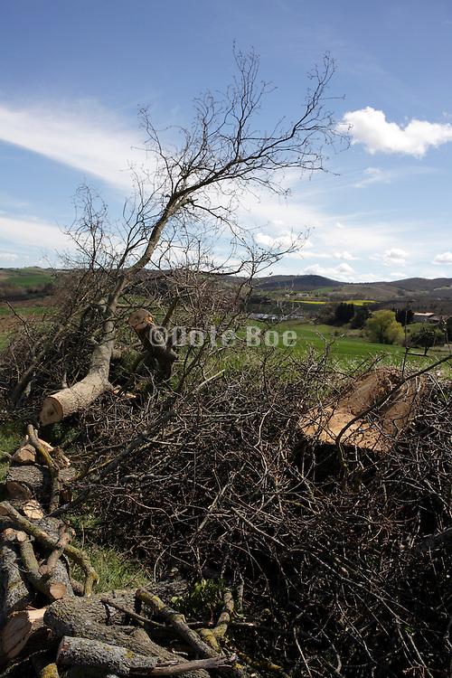 cut down tree in rural landscape