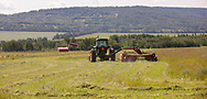 Photo Randy Vanderveen<br /> Dawson Creek, B.C. <br /> A farmer mows a hay crop just west of the Dawson Creek city limits Monday, July 26. Hay yields throughout western Canada are lighter than traditionally because of the hot dry weather that has plagued provinces west of Ontario.