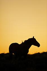 Wyoming Mustang Sunset Silhouette