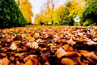 A leafy lane in stratford upon Avon