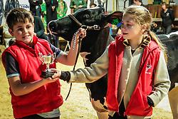 Prova do Jovem Puxador na 39º Expointer - Exposição Internacional de Animais, Máquinas, Implementos e Produtos Agropecuários. FOTO: Itamar Aguiar/ Agência Preview