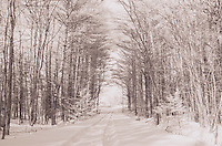 Infrared Winter Walk.  ©2015 Karen Bobotas Photographer