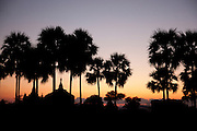 The silhouettes of temple tops and palm trees in the ancient city of Bagan, Myanmar