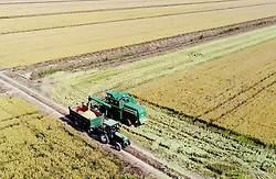 November 2, 2018 - Yancheng, Yancheng, China - Yancheng,CHINA-Peasants are busy with autumn harvest in Yancheng, east China's Jiangsu Province. (Credit Image: © SIPA Asia via ZUMA Wire)