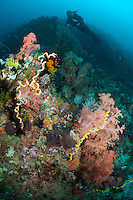 Diver and Reef Wall..Shot in Indonesia