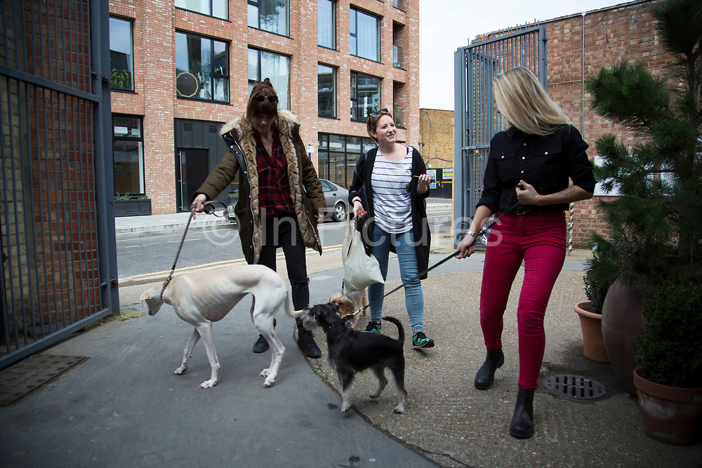 Dogs and their owners gather for the Doggie Cinema at Wringer and Mangle on 3rd April 2016 in Hackney, London, United Kingdom. Both human and dog equally enjoying the screening of acclaimed 2009 animation My Dog Tulip. At the event, the four-legged filmgoers have dog-friendly refreshments.