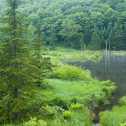 Wetlands and forest in Vermont's Green Mountains.  Eden, Vermont.