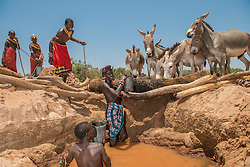 The Samburu warriors bring their cattle to dry river beds where they have dug wells. They sing as they lift the buckets of water from the deep wells  and each warrior's cattle knows which well is theirs based on the sound of the songs. (Photo by Ami Vitale)