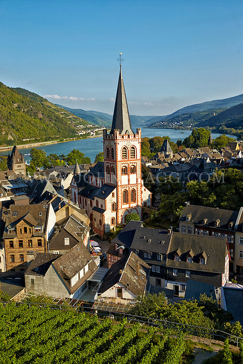Romantic Rhine view of St. Peter's Protestant Church, Rhine River, vineyards, and rolling hills, Bacharach, Germany.