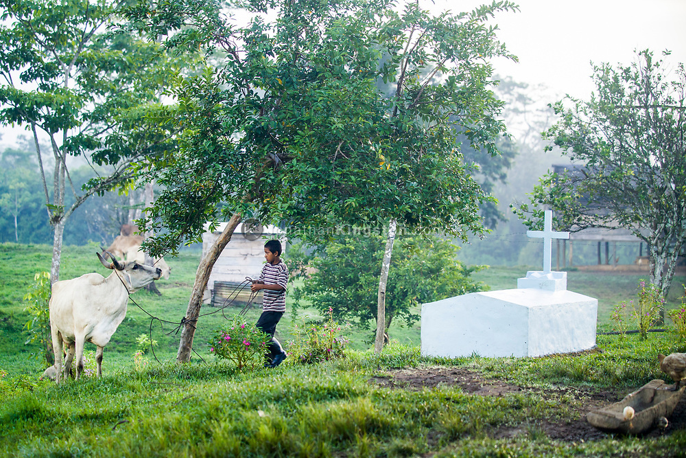 A young Miskito boy leads a cow past a gravestone in Krin Krin, Nicaragua.