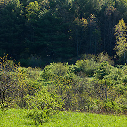 Trees on the edge of a field in Durham, New Hampshire.
