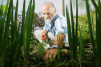 Kevin Hill photo<br /> 8/6/09<br /> Arran Stephens tends to the organic garden near the office of his company Nature's Path. Nature's Path is the first company to receive the approval to place the Canadian Organic Logo on their products.