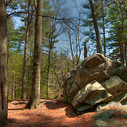 Glacial erratic in pine grove, Harold Parker State Forest, Andover, MA