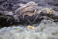 400 Year Old Man Discovered In Cliffs After Storm Washed Away Permafrost