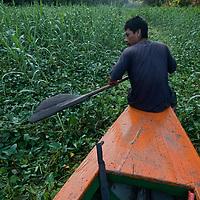 Wilder, a Yanayacu Indian guide, paddles  through dense aquatic vegetation as he navigates a tourist boat up the Yanayacu River in Peru's Amazon Jungle.