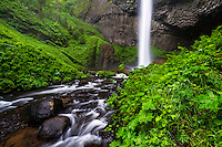 Latourell Falls cascades from the cliffs to the stream below on a rainy Spring day in the Columbia River Gorge.
