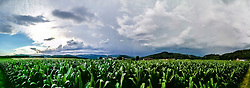 THEMENBILD - Wolken eines aufziehenden Gewitters über einem Maisfeld am 01. Juni 2017 // THEMES PICTURE - Clouds of an upcoming thunderstorm overn a cornfield on 01 June 2017. EXPA Pictures © 2013, PhotoCredit: EXPA/ Erwin Scheriau