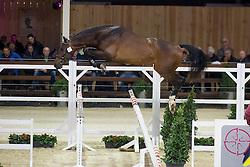 082, Important Style VK<br /> BWP Hengsten keuring Koningshooikt 2015<br /> © Hippo Foto - Dirk Caremans<br /> 23/01/16